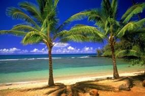 Обои Пальмовый рай: Пальмы, Песок, Берег, Природа
