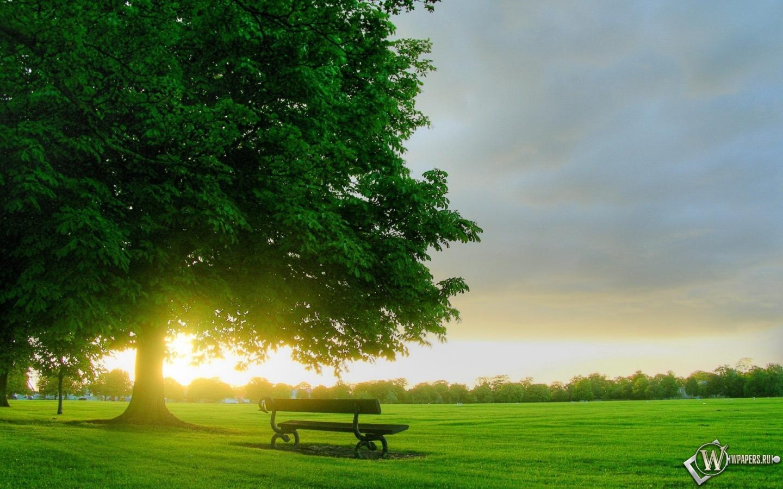 Дерево и скамейка 1440x900