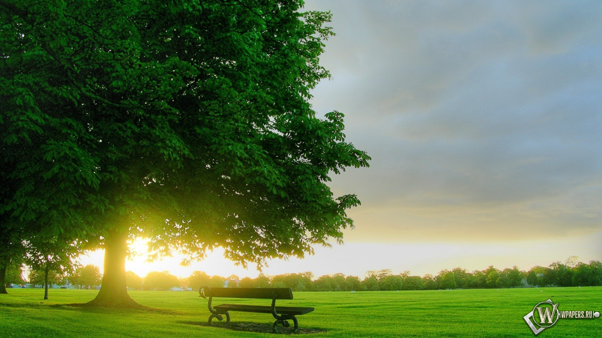 Дерево и скамейка 1920x1080