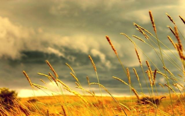 Ржаное поле