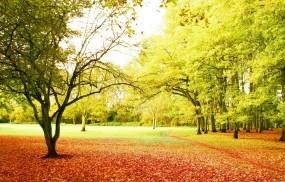 Обои Осенний парк: Деревья, Осень, Парк, Тропинка, Природа