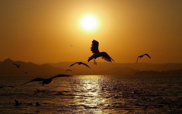Птицы на закате