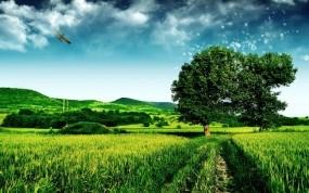 Обои Зелёное поле: Поле, Дерево, Небо, Прочие пейзажи