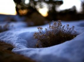 Обои Проталина: Зима, Снег, Трава, Куст, Природа