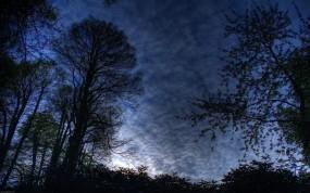 Обои Ночной лес: Деревья, Ночь, Небо, Природа