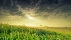 Обои Весеннее поле: Солнце, Поле, Небо, Весна, Природа