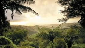 Обои Тропики: Зелень, Лес, Природа, Долина, Листья, Природа