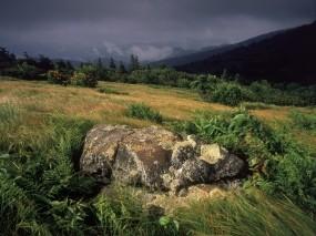 Обои Камни в траве: Трава, Камень, Склон, Природа