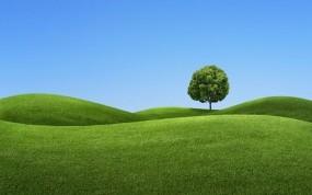 Обои Зелёный холм: Дерево, Небо, холм, Природа