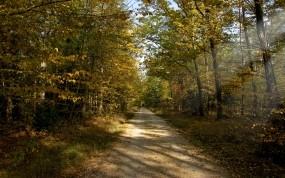 Осенняя тропа в лесу