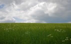 Обои Дождь на поле: Облака, Дождь, Поле, Природа