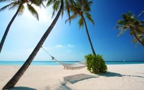 Обои Пальмовый рай: Пальмы, Пляж, Песок, Солнце, Берег, Небо, Утро, Природа