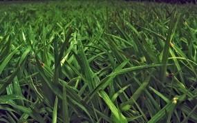 зеленого папоротника цвет