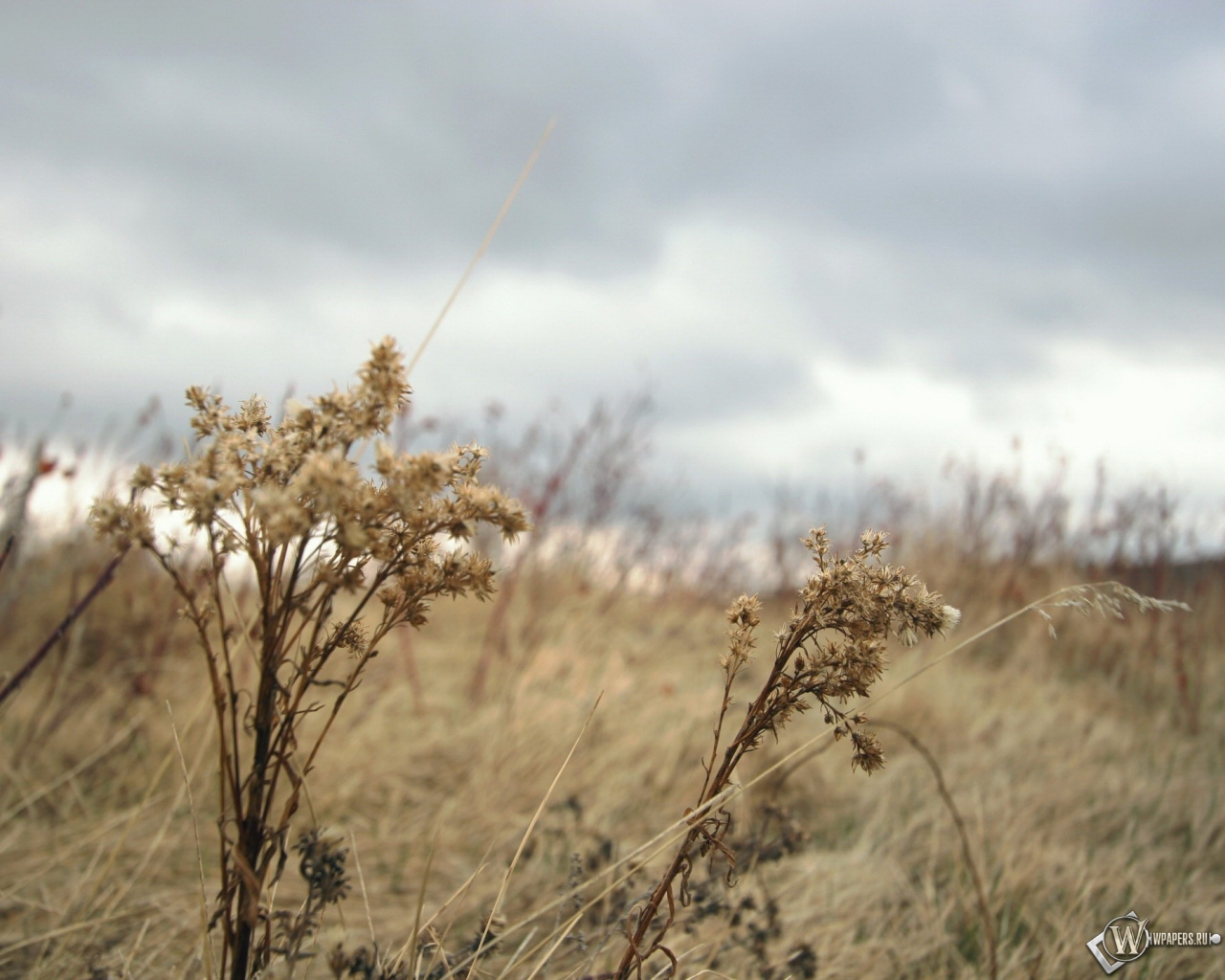 Картинки осень пасмурная