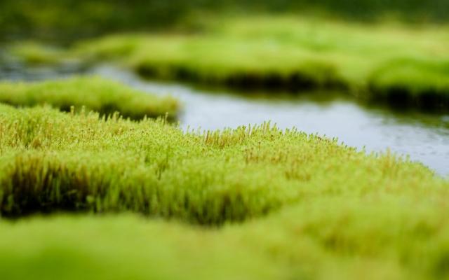 Летнее болото