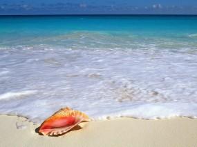 Обои Ракушка на берегу: Море, Пена, Ракушка, Природа