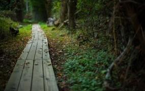 Обои Тропинка в лесу: Лес, Деревья, Лето, Тропинка, Природа