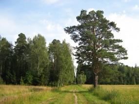 Обои Летний лес: Лес, Лето, Степь, Природа