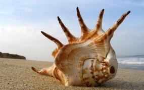 Обои Морская ракушка: Пляж, Песок, Море, Раковина, Природа