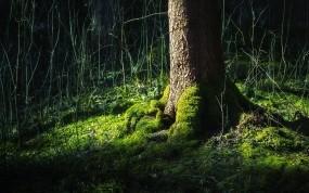 Обои Мох на дереве: Лес, Мох, Дерево, Природа