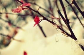 Обои Весна: Лёд, Капли, Дерево, Ветка, Куст, сенег, Природа