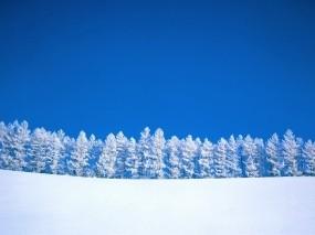 Обои Зимний пейзаж: Зима, Деревья, Небо, Елка, Зима