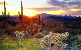 Обои Утро в прерии: Горы, Солнце, Восход, Небо, Цветы, Лучи, Кактусы, Природа