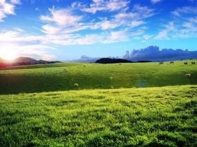 Обои Зелёный луг: Облака, Небо, Луг, Природа