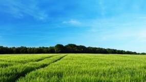 Обои Зеленеющее поле: Лес, Поле, Дерево, Небо, Природа