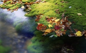 Обои ОСень в Японии: Осень, Япония, Листья, Ручей, Осень