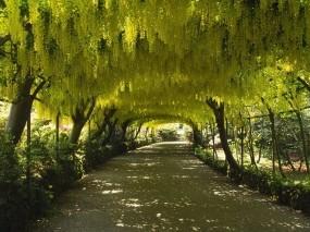 Обои Зелёный тоннель: Зелень, Дорога, Природа
