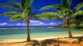 Обои Гавайские острова: Пальмы, Пляж, Море, Остров, Природа