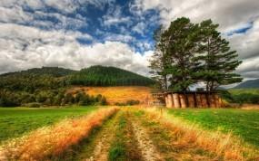 Обои Дорога в поле: Дорога, Поле, Трава, Природа