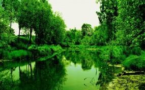 Обои Лесной водоем: Лес, Деревья, Водоём, Речка, Природа