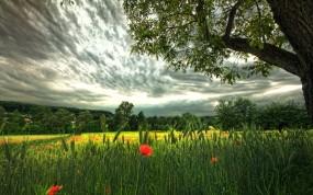 Обои Красивое поле: Природа, Поле, Фантастика, Небо, Маки, Рожь, Nature, Природа