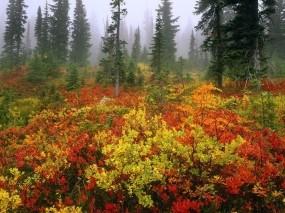Обои осенняя опушка: Лес, Туман, Осень, Опушка, Осень