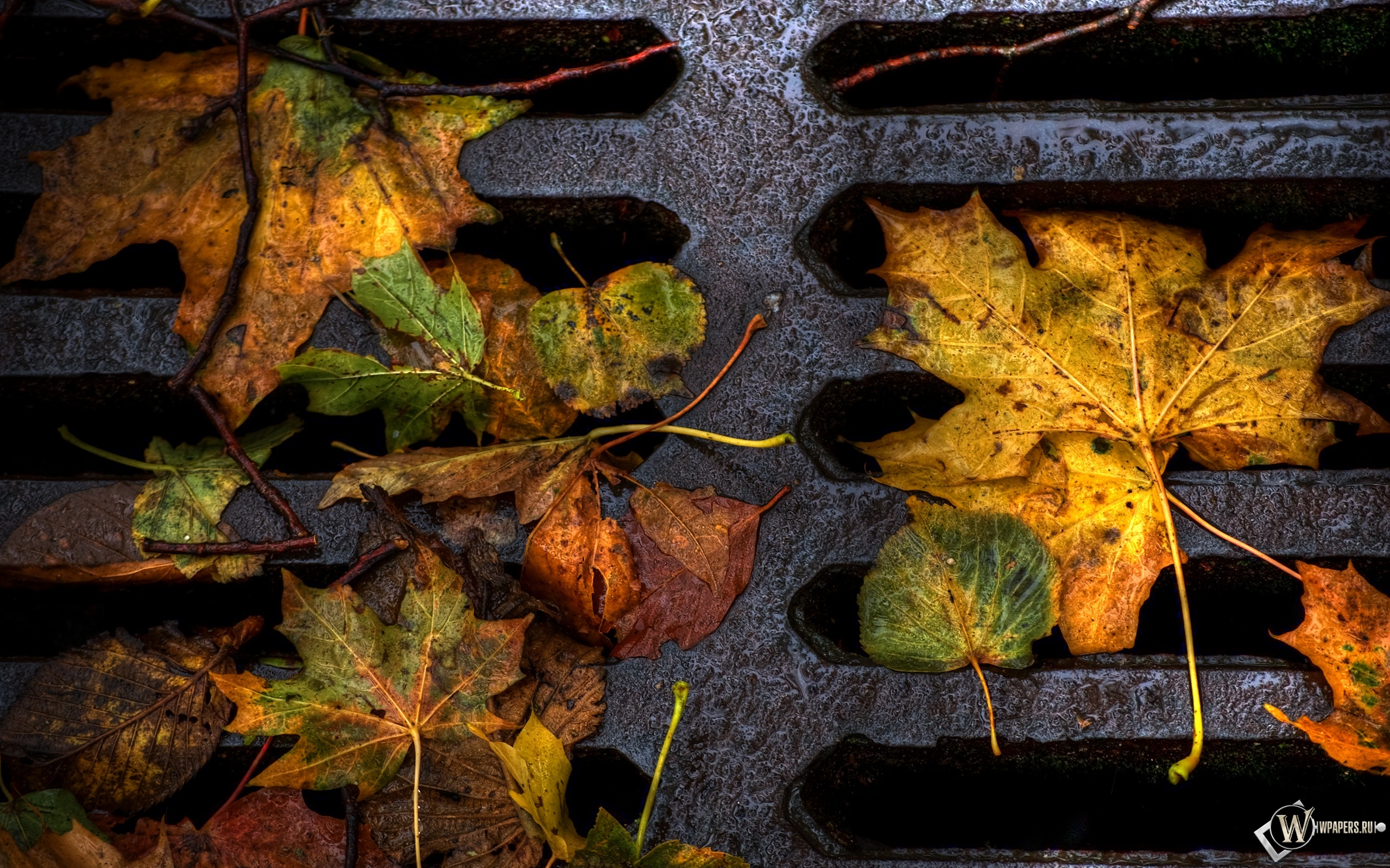 Опавшая листва 2560x1600