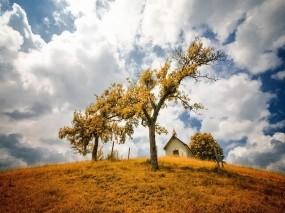 Обои Осенний пейзаж: Облака, Дерево, Небо, Осень