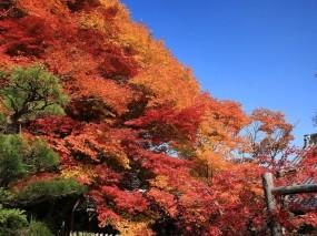 Обои Японская осень: Деревья, Осень, Небо, Япония, Листья, Осень