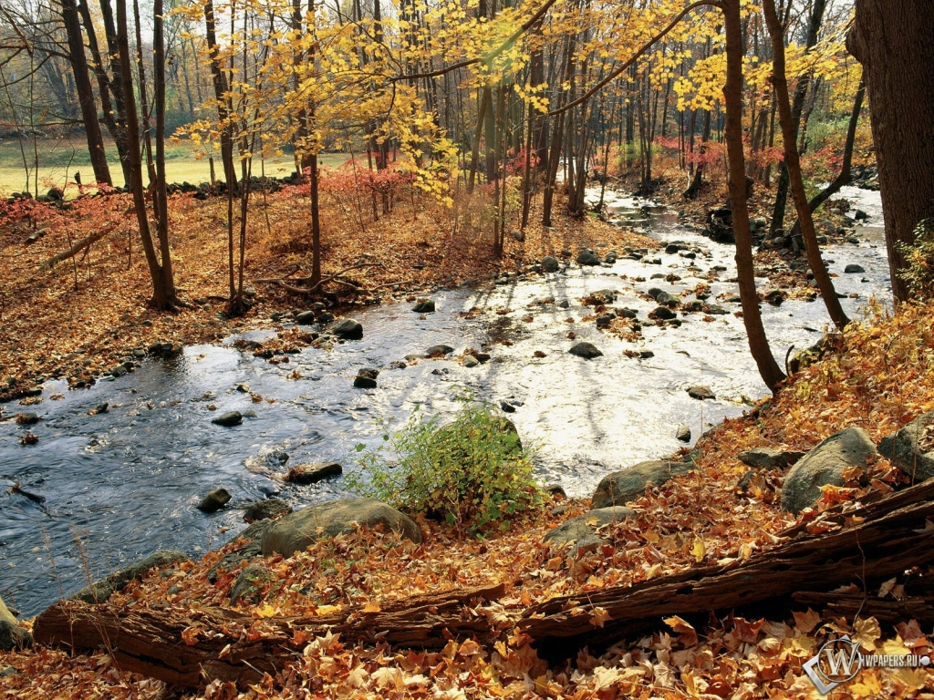 Осенняя река в лесу 1024x768