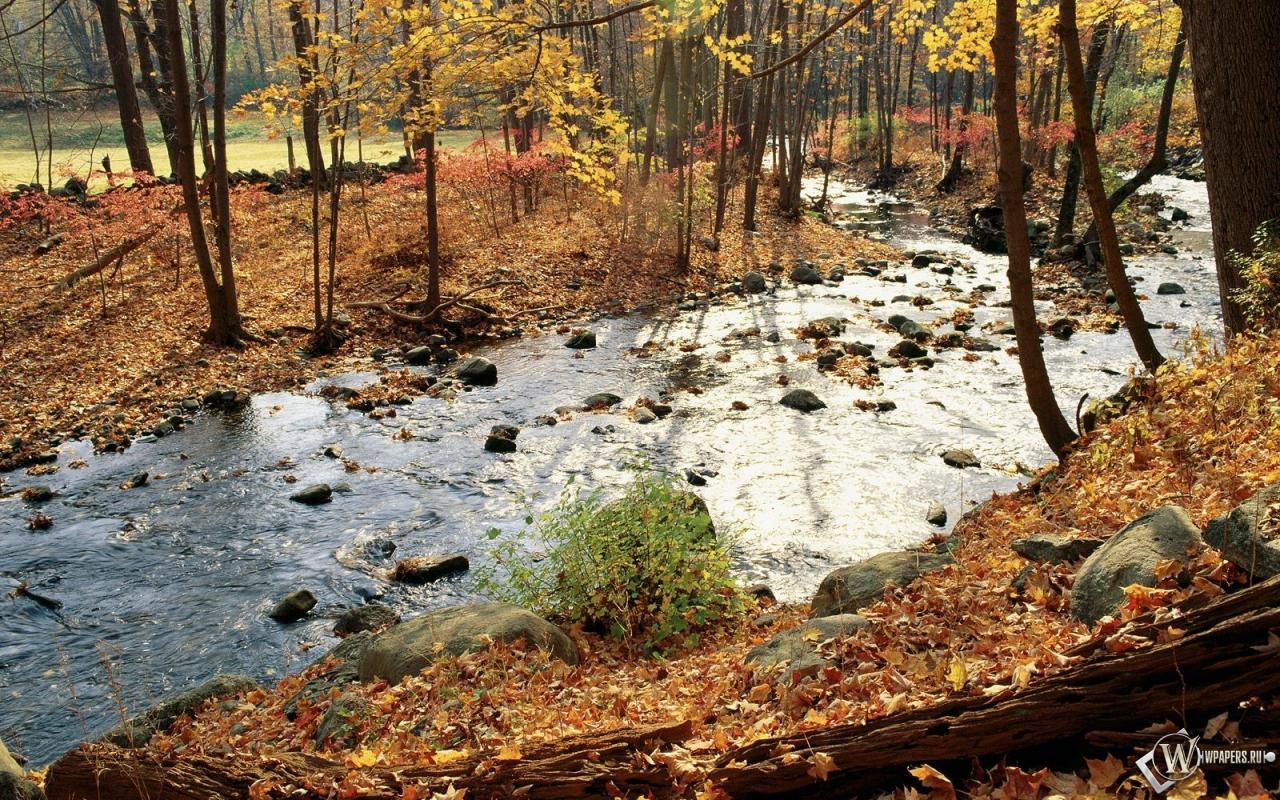 Осенняя река в лесу 1280x800