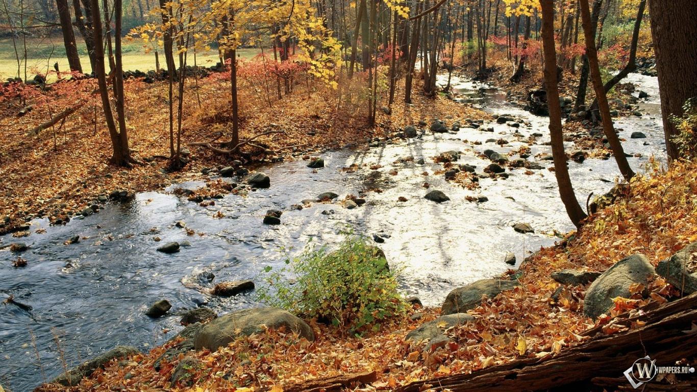 Осенняя река в лесу 1366x768