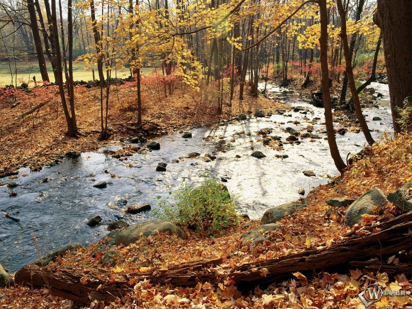 Осенняя река в лесу 1400x1050