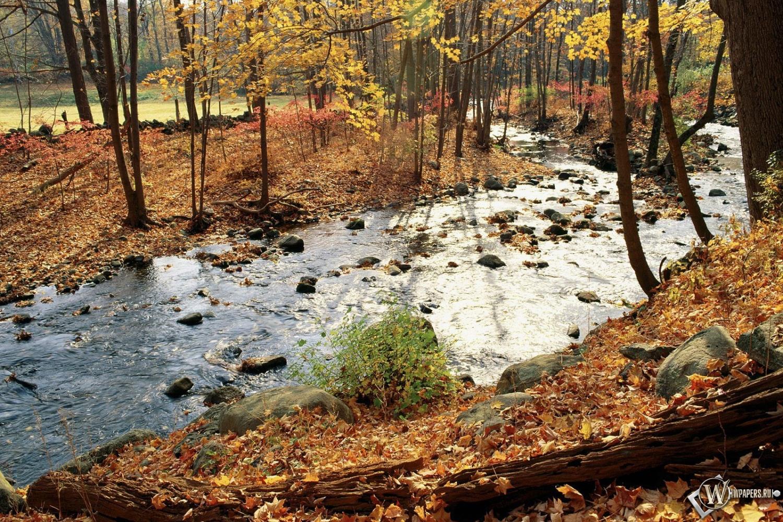 Осенняя река в лесу 1500x1000