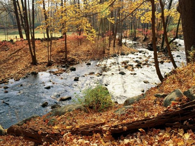 Осенняя река в лесу