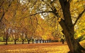 Обои Осенняя аллея: Осень, Дерево, Трава, Листья, Осень