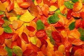 Обои Осенние листья: Осень, Листья, Осень
