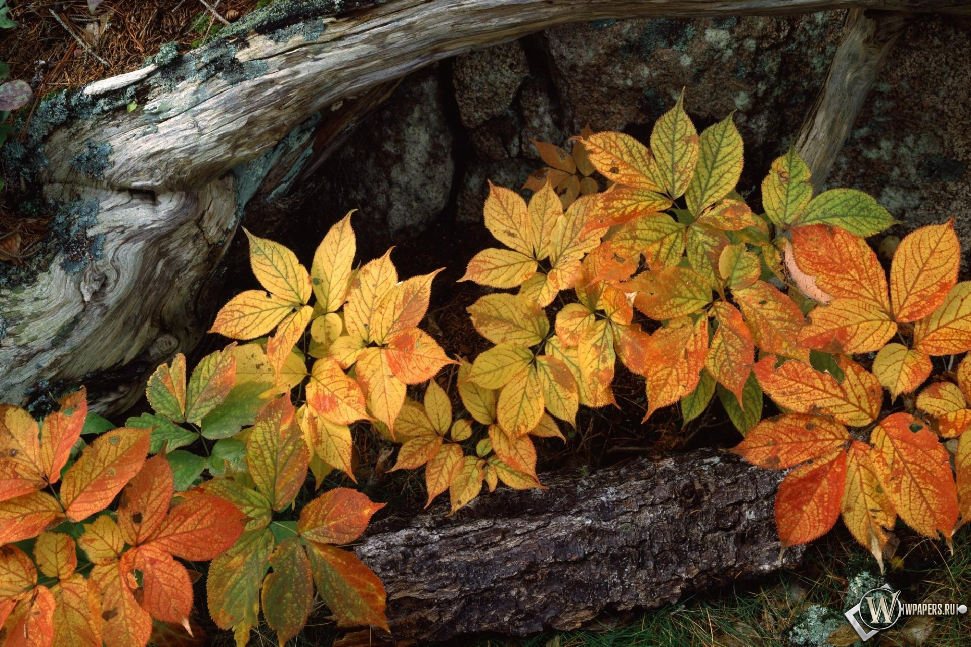 Осенние листья 1920x1280