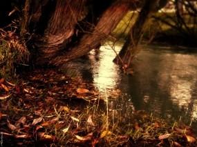 Обои Опавшие листья: Деревья, Осень, Листья, Осень