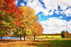 Обои Осенние мотивы: Облака, Деревья, Осень, Небо, Осень